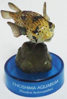 【中古】トレーディングフィギュア ハリセンボン 「新江ノ島水族館立体生物図録」