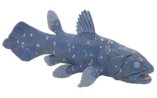 【中古】フィギュア Coelacanth-シーラカンス- 「WILD SAFARI -ワイルドサファリ-」 塗装済み完成品