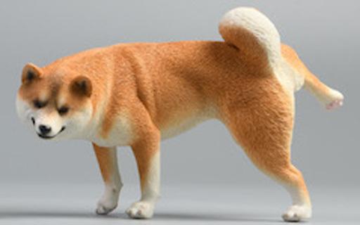 JXKスタジオ 新品 フィギュア 柴犬 レッグリフトC 1/6 塗装済み完成品