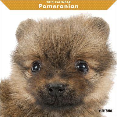 【中古】カレンダー THE DOG ポメラニアン 2015年度カレンダー