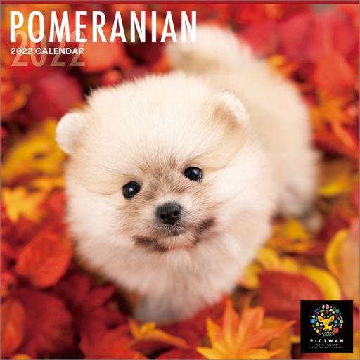 ハゴロモ 新品 カレンダー PICT WAN ポメラニアン 2022年度カレンダー