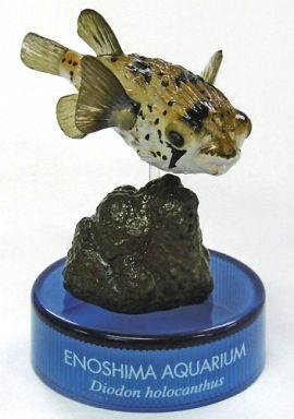 【中古】ペットボトルキャップ ハリセンボン 「新江ノ島水族館への誘い」 ボトルキャップ