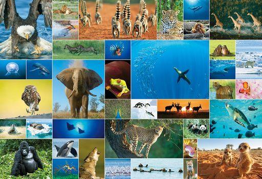 ビバリー 新品 パズル Life of Animal 「アート」 ジグソーパズル 1000ピース [31-504]