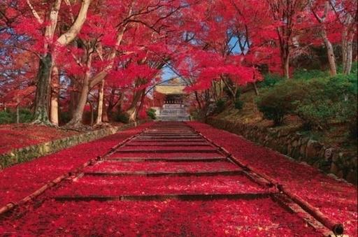 やのまん 予約 パズル 秋色の紅葉参道(京都) 「日本の風景」 ジグソーパズル 1000ピース [10-1400]