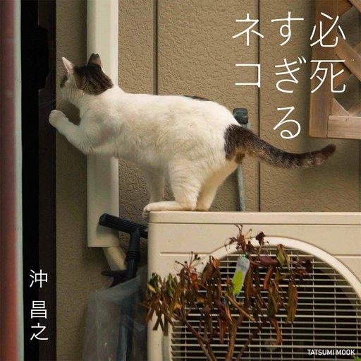 【中古】動物・ペット雑誌 写真集 必死すぎるネコ