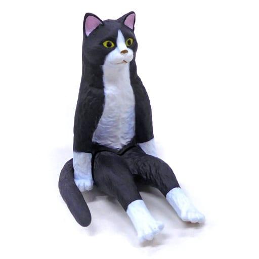 ハチワレ 「座る大猫」