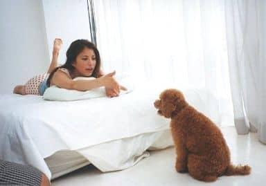 SPEED/上原多香子/横型・全身・衣装赤白・うつ伏せ・犬・背景白/公式生写真
