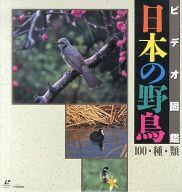 ビデオ図鑑 日本の野鳥100種類