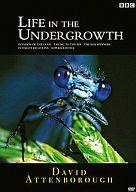 不備有)BBC ライフ・イン・ザ・アンダーグロウス 昆虫の世界 DVD-BOX(状態:収納BOXに難有り)