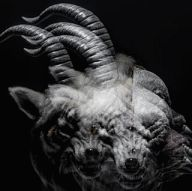 the GazettE / BEAUTIFUL DEFORMITY[通常盤]