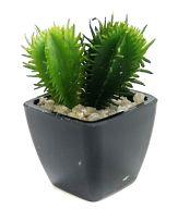 エキノケレウス金竜(Echinocereus) 「デスクトップガーデン【多肉植物】2」