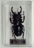 ベリコサツヤクワガタ(雄) 「世界の昆虫 DATA BOOK 第52号」 付録フィギュア