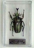 ポリフェムスオオツノカナブン(雄) 「世界の昆虫 DATA BOOK 第53号」 付録フィギュア