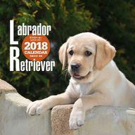 ラブラドール・レトリーバー 2018年度大判カレンダー