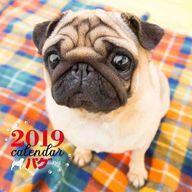 パグ 2019年度大判カレンダー