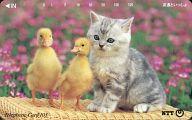 猫/アヒル「友達といっしょ 105度数」