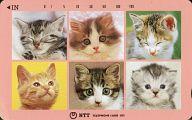 計6匹「猫 105度数」