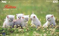 チンチラ/計4名「Kittens」