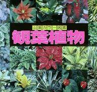 <<科学・自然>> 山溪カラー名鑑 観葉植物 / 高林成年