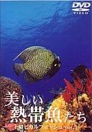 BGV ◆ 1) Tropical fish Beautiful tropical fish
